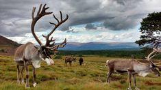 Scozia: come organizzare un viaggio on the road da soli - 50sfumaturediviaggio Round Trip, Moose Art, Horses, Animals, Animales, Animaux, Animal, Animais, Horse