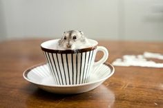 Mousey cup.