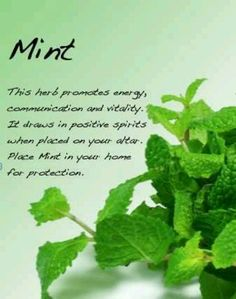 10 Herbs To Help You Mentally and Physically – Natural Mommy Magic Herbs, Herbal Magic, Healing Herbs, Natural Healing, Herbal Remedies, Natural Remedies, Green Witchcraft, Witchcraft Herbs, Witch Herbs