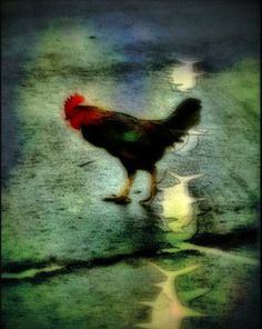 © Shirley Drevich 2011 – 'Rooster Crossing Fish' – Apps used – Native iPhone4, PerfectPhoto, Artista Haiku, Dynamic Light, Filterstorm, Iris