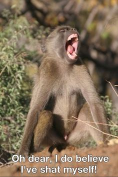 nuff said baboon