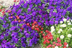 Primavera, El Retiro, flores