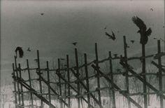 Masahisa Fukase's Ravens
