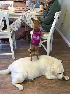 Die 1031 Besten Bilder Von Hunde In 2019 Doggies Cutest Animals