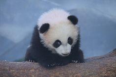 Sheepish Mei Lun | Flickr - Photo Sharing!