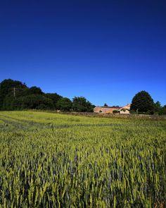 Champ de mai.  #igersnouvelleaquitaine #igersfrance #igersoftheday #igersniort #igersdeuxsevres #nouvelleaquitaine #saintgelais #champ #blé #skylovers #sky #campagne  #etod79_79 #etod79_spring #etod79_sky Champs, Mai, Vineyard, Album, Instagram, Spring, Outdoor, Rural Area, Outdoors