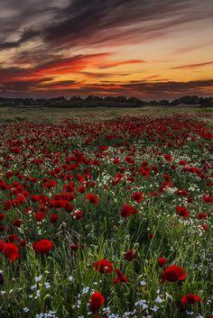 Red… Spring worldby George Papapostolou
