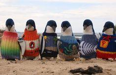 Ölpest: 109-Jähriger leistet mit Strickpullis erste Hilfe für Pinguine