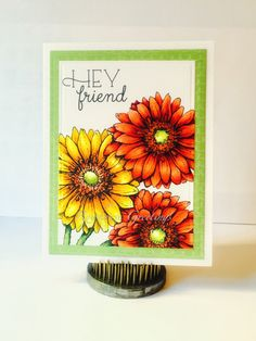 Rowhouse Greetings   Friendship   Gerber Daisies by Power Poppy