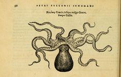 Petri Bellonii Cenomani De aquatilibus, - Biodiversity Heritage Library
