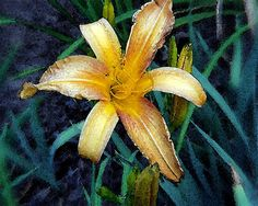 Yellow Daylily Fine Art Photograph Home Decor by bluemoonstudio, $15.00   (Frankie Kins)