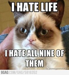 Grumpy cat.  probly getting enough of my kitty pics.. but HAHA