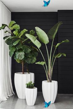 badbifunow Potted Bliss: Indoor Plants 101 -  I have been inspired recently to add something living to my interior design scheme – something gr - #bliss #HomeInteriorDesign #indoor #ModernHouseDesign #plants #potted #WebDesign<br> Plant Design, Garden Design, Design Art, Modern Design, Plantas Indoor, House Plants Decor, Indoor Plant Decor, Indoor Green Plants, Indoor House Plants