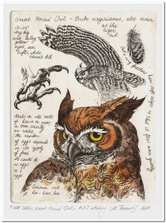 980 × 1325 pixels Best Picture For dessin croquis cheveux For Your Taste You are look Owl Art, Bird Art, Animal Drawings, Art Drawings, Vogel Illustration, Art Watercolor, Arte Sketchbook, Drawn Art, Nature Drawing