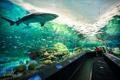 Ripleys Aquarium Toronto Has a stunning walk through and outstanding exhibits.