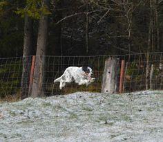 Gårdstunet Hundepensjonat: Herlig (og glatt!) vinterdag! Flotte gjester på tu...