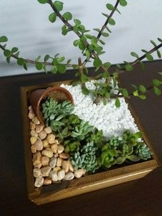 If there's one fast growing trend in plant arrangements, it's the world of ideas for succulent garden. Check out the best outdoor design ideas # succulent Gardening 15 Awesome Succulent Garden Ideas for Uniqueness in Your Garden Garden Crafts, Garden Projects, Garden Art, Garden Design, Cactus Terrarium, Succulent Gardening, Planting Succulents, Flower Gardening, Indoor Gardening