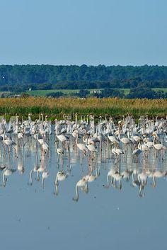 roseus) in the marshes of the Sado Estuary Nature Reserve. Setubal Portugal, Visit Lisboa, Iberian Peninsula, Nature Adventure, Nature Reserve, Natural Living, Natural Wonders, The Good Place, Earth