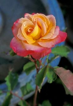 Quase poeta. poemas: mãe,flor.