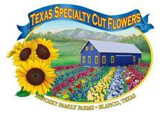 Texas Specialty Cut Flowers and Arnosky Family Farm - LocalHarvest