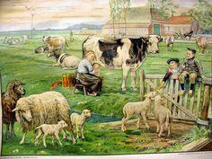 Oude schoolplaten met koe en schapen