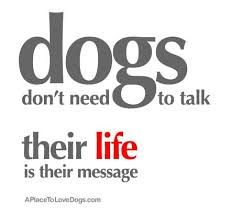 Thoughts about dogs