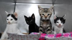 4_kittens_in_cage_looking_front