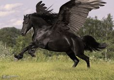 Black Pegasus by brunosm | 10th place entry in Unicorns and Pegasi 6