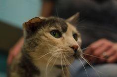 Arietti - has the sweetest little folder ear.  #perfectpair #adoptme #everybodyneedsabuddy