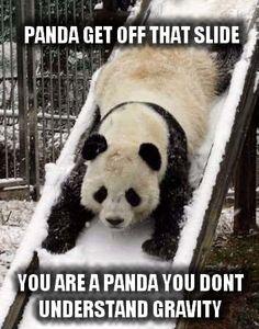 Panda get off that slide!