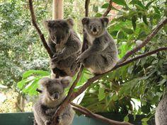 เยือนประเทศ#ออสเตรเลีย #ซิดนีย์ –#บลูเม้าท์เท่น #โคล่าปาร์ค – #หุบเขาสามพี่น้อง – นั่งรถรางที่ชันที่สุด – ช๊อปปิ้ง QVB. #พอร์ทสตีเฟ่น – นั่งรถ 4 WD – ชมปลาโลมา – เล่นกระดานเลื่อนบนเนินทราย เดินทาง 20–24 ส.ค.//10–14 , 24–28 ก.ย. 57 ราคา 59,900 บาทค่ะ ดูรายละเอียดเพิ่มเติมได้ที่ http://99worldtravel.com/Tour/Australia/view/817