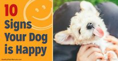 Do you know if your dogs are happy? Here are 10 signs your dog is a happy camper. http://healthypets.mercola.com/sites/healthypets/archive/2017/06/19/happy-dogs.aspx