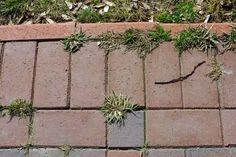 Cu siguranță te scot din sărite acele ore petrecute în curte, doar pentru a îndepărta buruienile care cresc printre plantele tale frumoase. Cum dorim să îți fim de ajutor, iată ce trucuri ți-am pregătit azi!     Optează pentru aceste tehnici și grădina ta va fi curând, cea mai frumoasă! Garden Ideas, Banana, Gardening, Plant, Garten, Bananas, Lawn And Garden, Fanny Pack, Garden