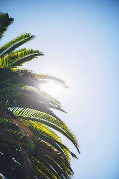 Visit Us if you enjoy the Cali Life, This is why you should live in California!  Best Beaches Southern California, Surfing the California Waves ,Palm Trees, Surfing California, Laguna Beach,Venice Beach, Beach Pier, Carlsbad Beach,Pfeiffer Beach Arch,  Malibu,LA, santa cruz, best beaches, vintage, surfing california girl ,surfboard ,california travel,los angeles california,california style,things to do in california,california tattoo,california photography,california beach,calif..