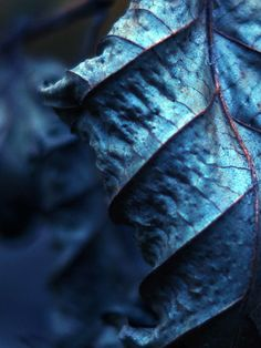 PRUSSIAN BLUE - INNOVATIONS 2016 COLOR OF THE YEAR | Blue Leaves