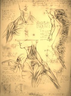 Muscle Anatomy of an angel by ~zenithcollector on deviantART
