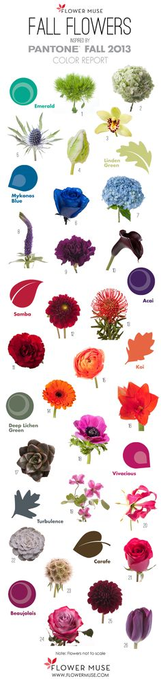 We share our picks of fall flowers as inspired by Pantone's 2013 Fall Color Report. See an array of red, orange, purple, fuchsia, green & grey!