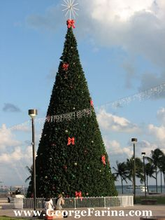 Christmas In Miami - Downtown Miami by Bayfront Park.