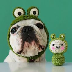 Frog Dog.