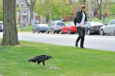 vultures scare hipsters