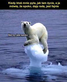 Polar bear survival documentary PART 1 - exiled ICE BEAR faces his longest struggle/journey He is the most dangerous predator of the Arctic. Now the Ice Bear. Animal Captions, Funny Animals With Captions, Funny Animal Quotes, Funny Animal Pictures, Animal Funnies, Dog Pictures, Funny Images, Funniest Animals, Funniest Pictures