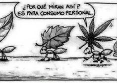 Nico-Weed para #GrowLandiaComunidad - http://growlandia.com/highphotos/media/personal/