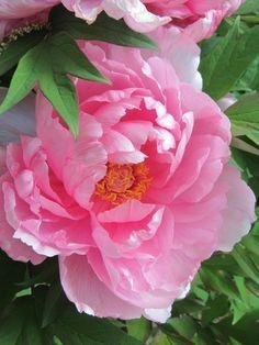 vinushuka:   https://fi.pinterest.com/dan330/ - The Rose Garden