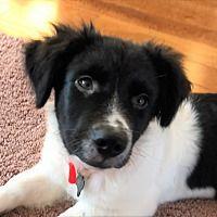 Pet Card Labrador Retriever Rescue Dogs Pets