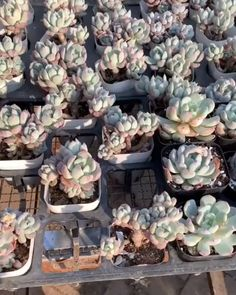 Ever wondered when and why you need to repot your succulent plants? Succulent City is here to help you with that and keep your succulents healthy!How to Repot Succulents(the right way)!Know What Gurus Think About Assorted Succulents 221 Repotting Succulents, Growing Succulents, Cacti And Succulents, Growing Plants, Cactus Plants, Planting Flowers, Cactus Flower, Caring For Succulents Indoor, How To Propagate Succulents
