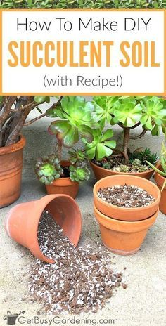 How To Make Your Own Succulent Soil (With Recipe!) - House Plants - ideas of House Plants - This 3 ingredient succulent potting mix recipe is inexpensive easy to make and the best soil for succulents. Here's how to make your own succulent soil! Succulent Potting Mix, Succulent Gardening, Garden Soil, Planting Succulents, Container Gardening, Gardening Tips, Planting Flowers, Organic Gardening, How To Propagate Succulents