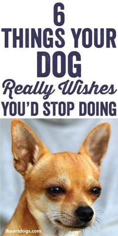 6 Things Your Dog Really Wishes You'd Stop Doing