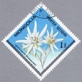 Edelweiss : MONGOLIA - CIRCA 1979: A stamp printed in Mongolia shows Edelweiss, series, circa 1979 Stock Photo