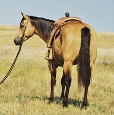 Cuervo - Buckskin Gelding for Sale - For more information click on the image or see ad # 45900 on www.RanchWorldAds.com