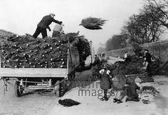 Weihnachtsbäume werden von einem Lieferwagen geworfen, 1940, ullstein bild - ullstein bild/Timeline Images #Weihnachtsbäume #Tannenbaum #Tannenbäume #Weihnachtsbaum #Lastwagen #Arbeit #kinder #christmas #historisch #Männer #schwarzweiß #40er #40ies Christmas, Cargo Van, Historical Pictures, Christmas Time, Xmas, Navidad, Noel, Natal, Kerst